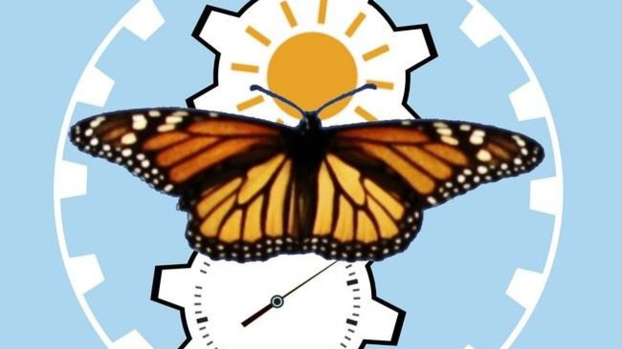 How Monarch butterfly never gets lost during 2000 mile long