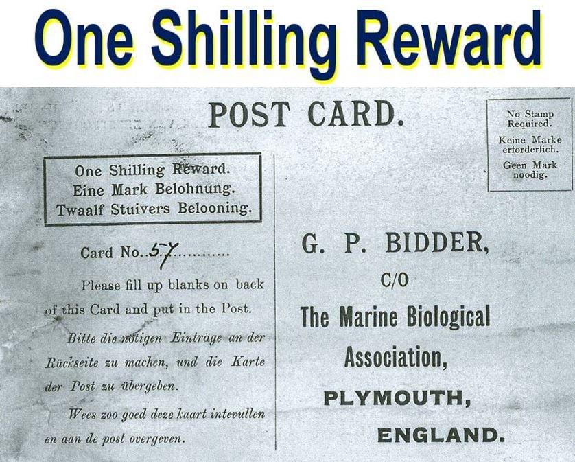 One shilling reward to finder