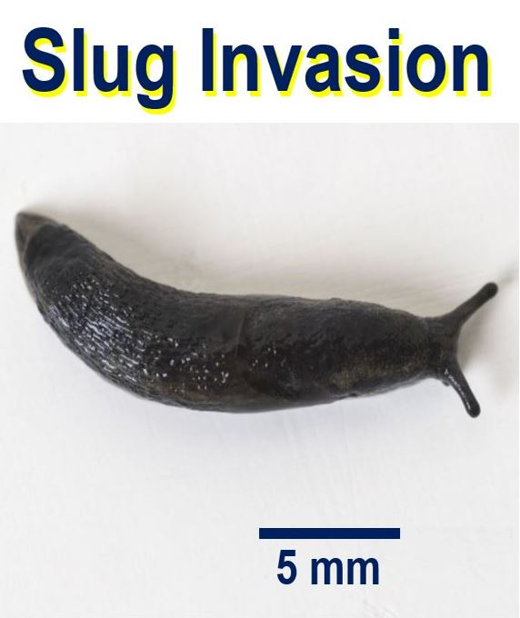 Slug invasion UK gardens