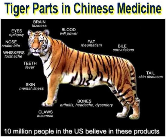 Tiger parts used in Chinese medicine