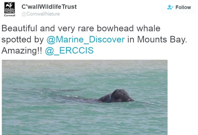 Bowhead Whale twitter posting