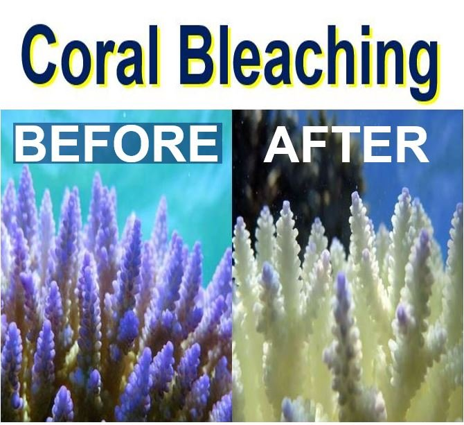 Coral Bleaching after and before