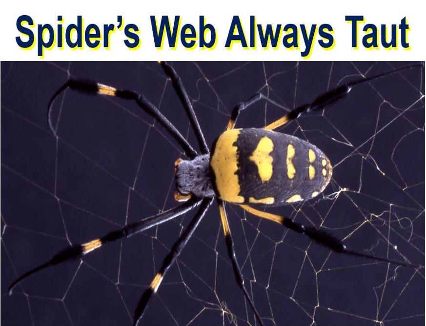 Spider web always taut