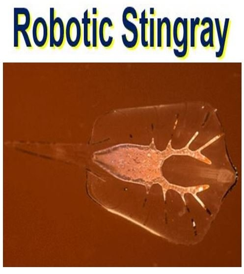 Robotic Stingray