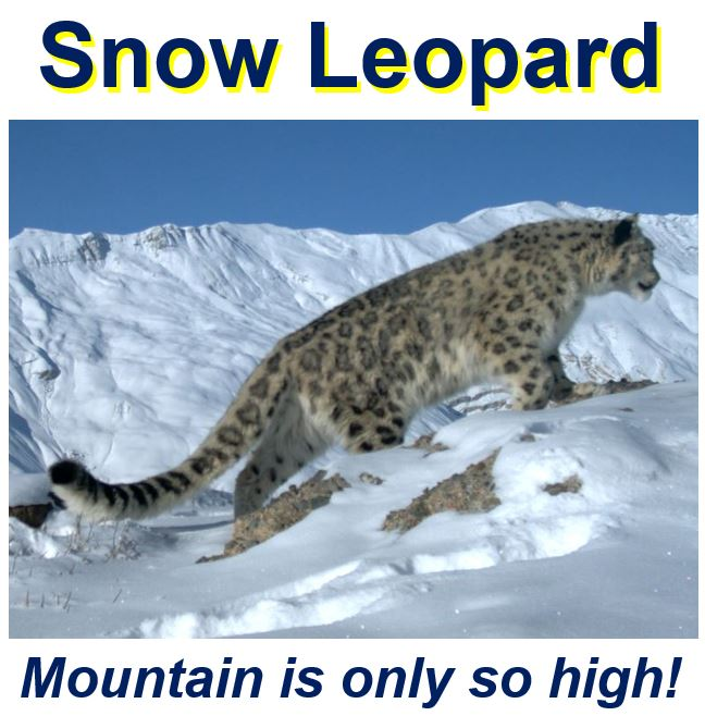 Climate change speed - Snow Leopard