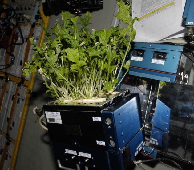ISS fresh vegetables