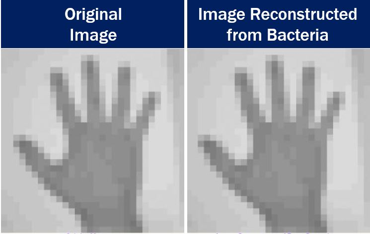 Bacterial DNA used for reconstructing images