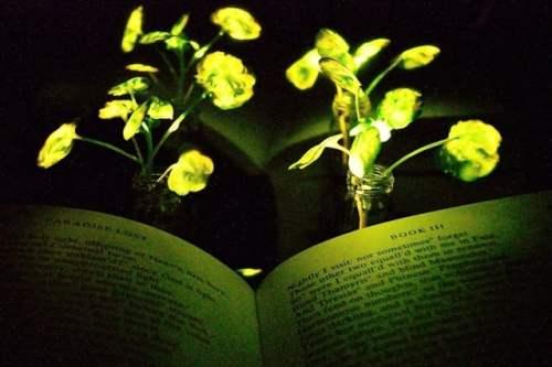 glowing plants illuminate book