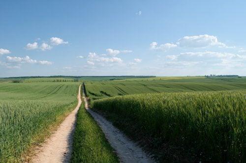 graphene fertilizer carrier wheat field