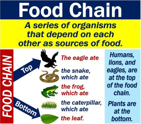 What Is The Food Chain Definition And Examples Market Business News