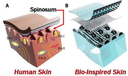 Skin of the electronic glove vs human skin