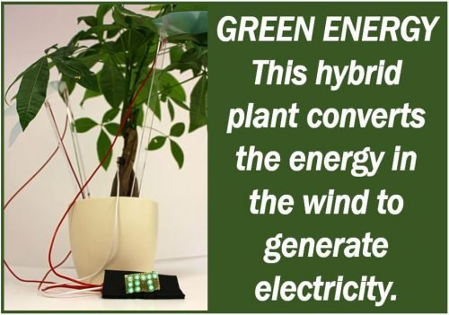 Green Plants Produce Electricity