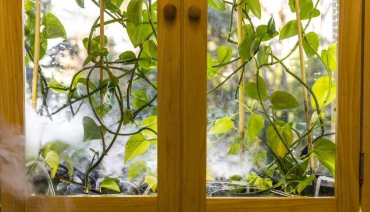 Plant inside an enclosure