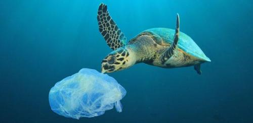plastic carrier bag and turtle