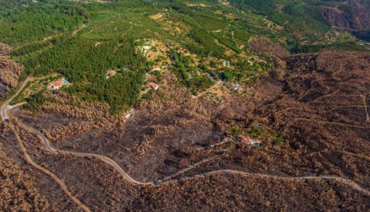 European Commission approves biomass energy scheme
