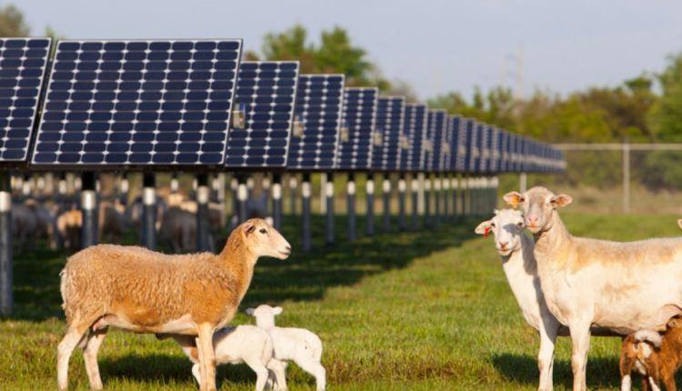 FPL solar power plant – image