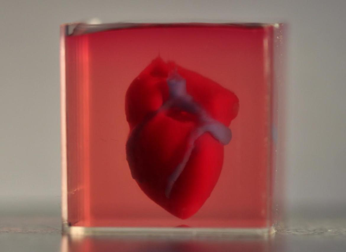 3d-printed-small-scaled-human-heart