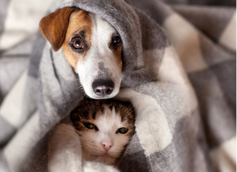 Anti-vax movement - image of dog and cat - 1111
