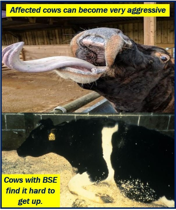 Mad Cow Disease image 2232