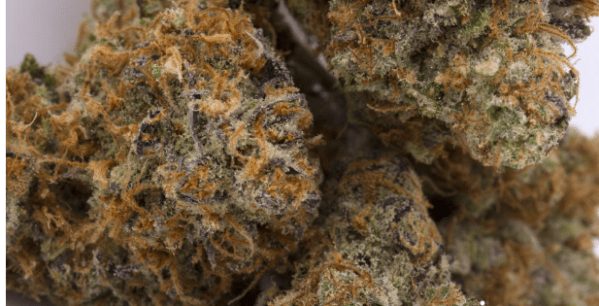 Phantom OG Strain is a powerful hybrid OG Strain that is known for its strong, cerebral effects. This particular batch was grown by Buds and Roses