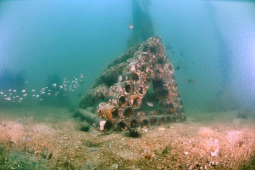 บ้านปลาเอสซีจี