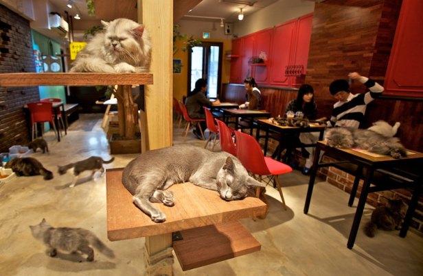 อาหารสัตว์เลี่้ยง คาเฟ่แมว
