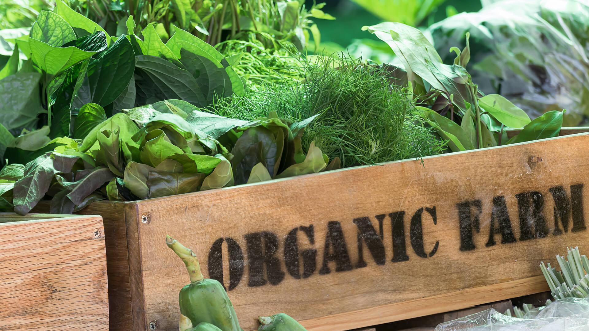How Grow Vegetables