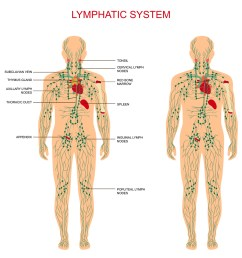 massage therapy is commonly confused with manual lymph drainage but the two treatments utilize different techniques more pressure is applied through the  [ 1000 x 1000 Pixel ]
