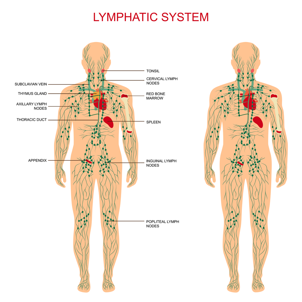 medium resolution of massage therapy is commonly confused with manual lymph drainage but the two treatments utilize different techniques more pressure is applied through the