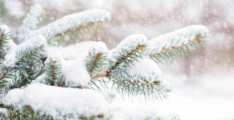 Green Christmas or white Christmas