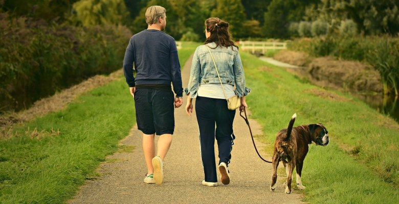 Council clamps down on dog walkers exercising large numbers of dogs