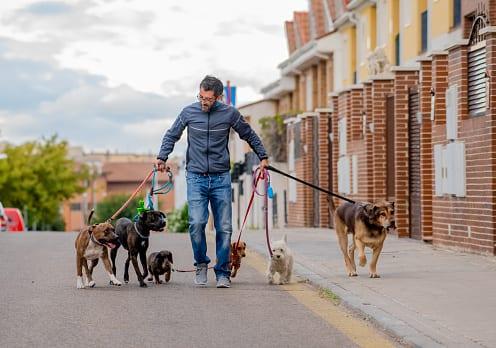 SEO Keywords for Dog Walkers