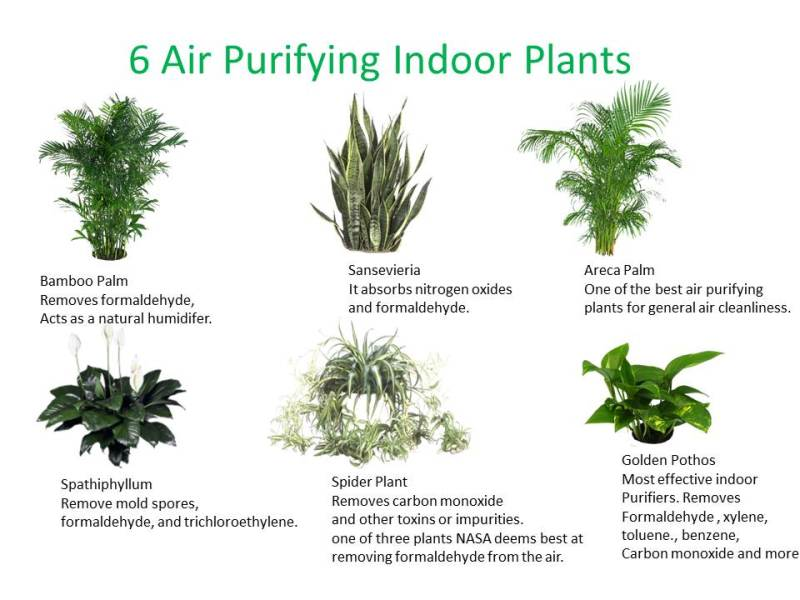 6-good-indoor-plants