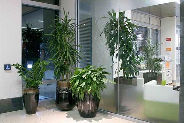 office-plantscape-3