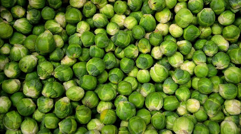Will Sprouts Survive?
