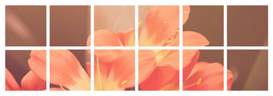 Floral Grid Tumblr Banner  Templates by Canva