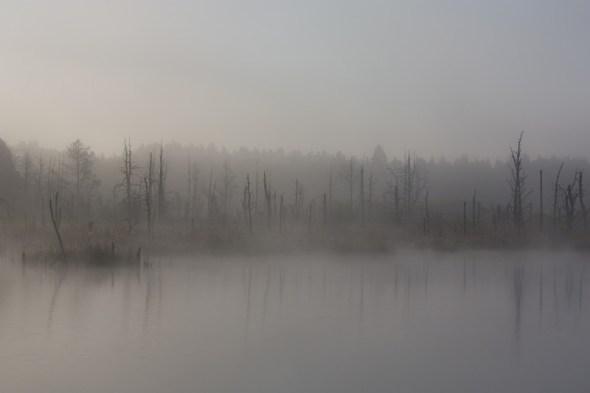 Fog, Moor, Autumn, Swamp, Nature Reserve
