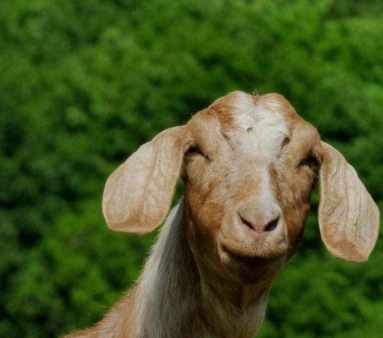 Animal Farm Wallpaper Free Amp Premium Stock Photos Canva