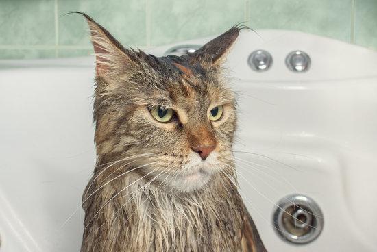 wet cat in the