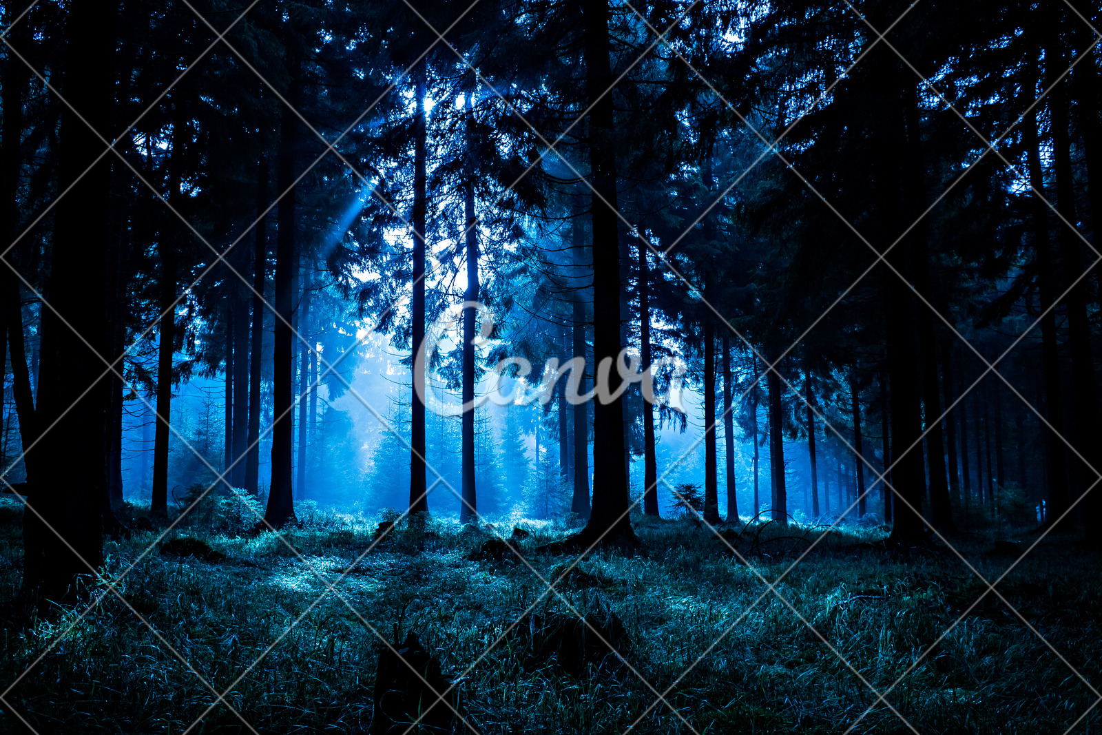 night forest photos by