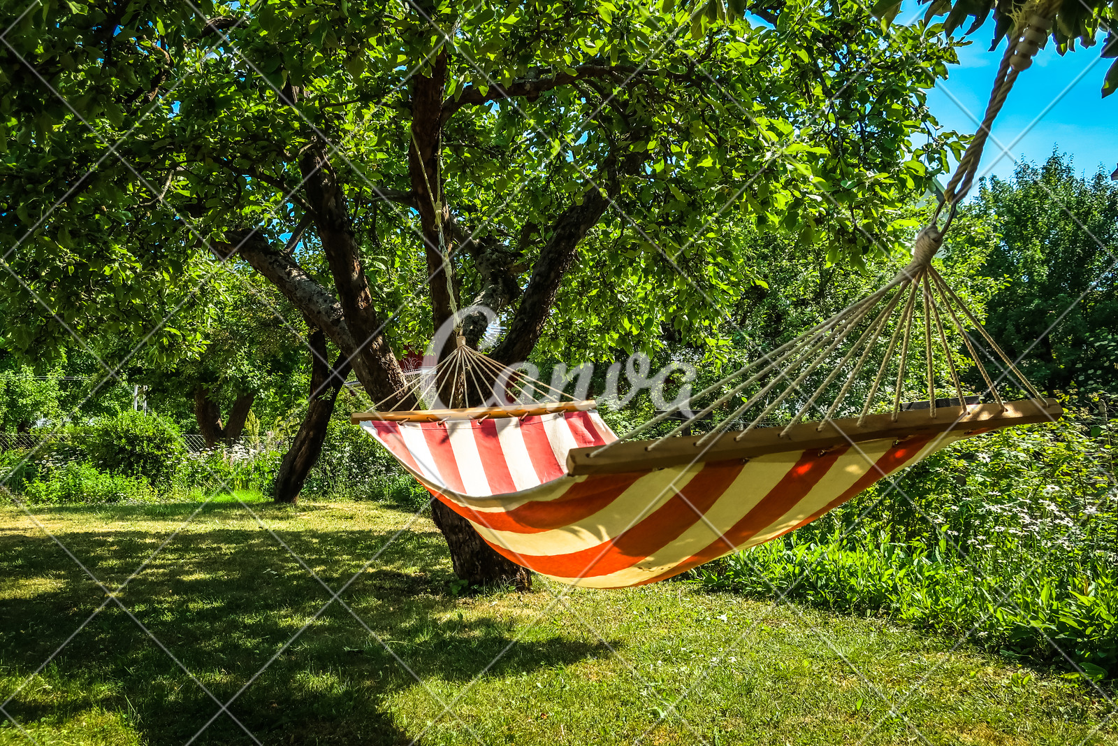 hammock between two trees
