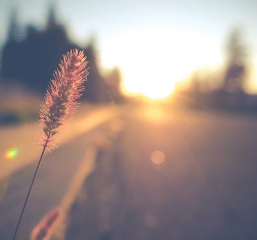 piece of wheat along roadside image fractional cmo