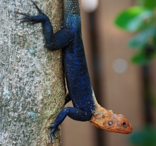 colorful lizard showing growth and vibrancy through strategic marketing consultants