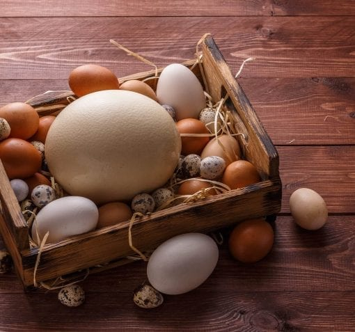 differentiation through strategic marketing consulting, shown as a basket of eggs