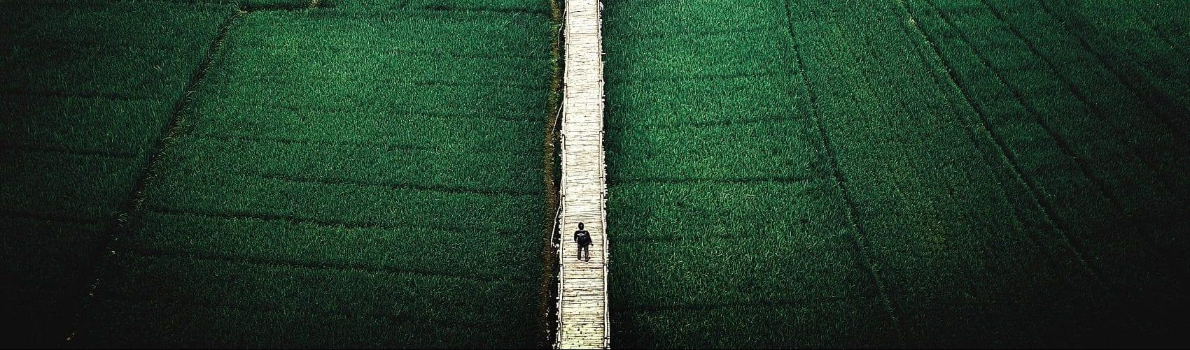 Boardwalk in a Field