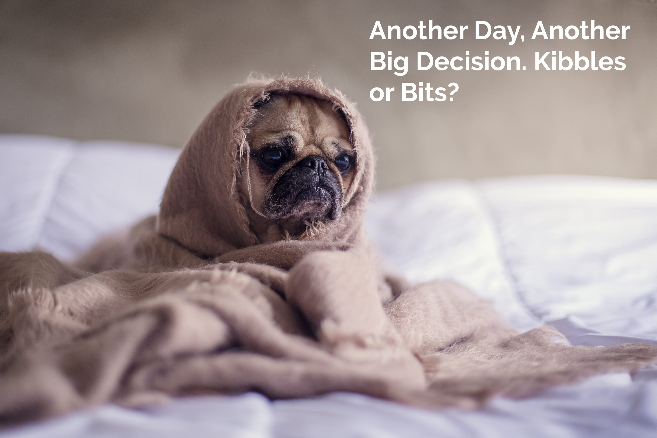 Pug Making Life Decisions for Blog