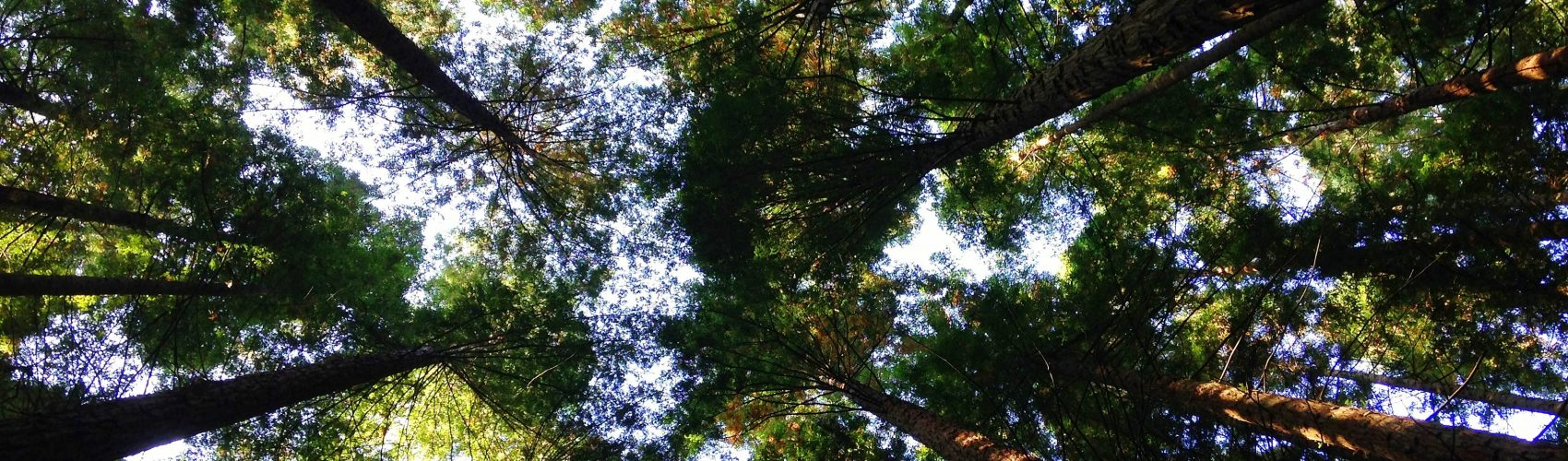 Chief Growth Officer blog hero image_view of trees from the ground up