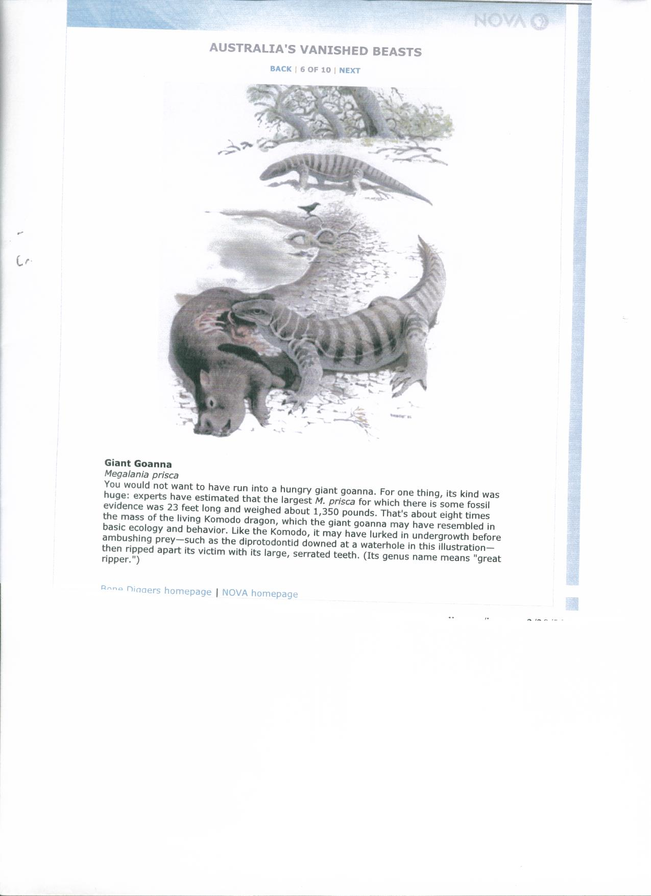Komodo Dragon Food Chain