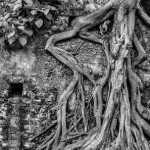 Rooted, Juhi Saklani