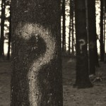 questions marks on trees in a forest